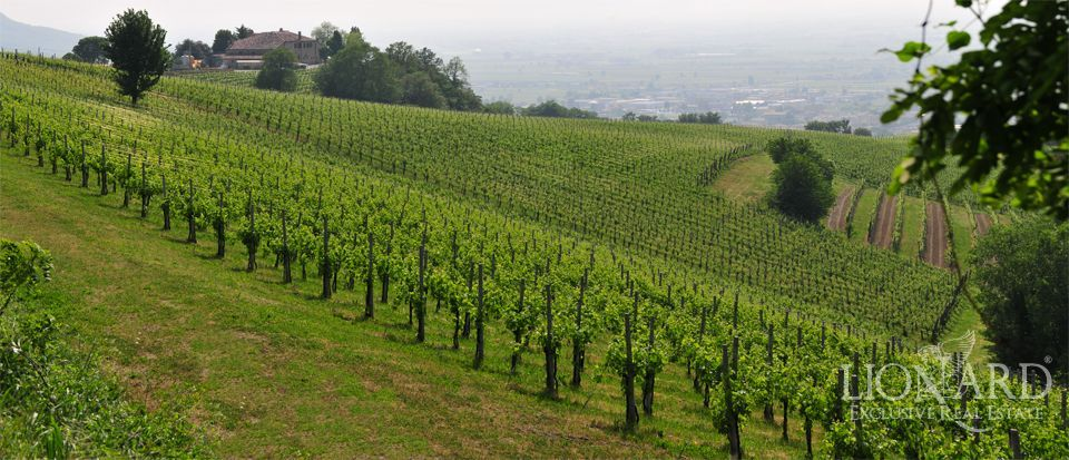 real estate veneto buy vineyard italy